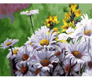 """Paintboy Картина по номерам """"Ромашки на лугу"""" 40х50 см (GX23596)"""