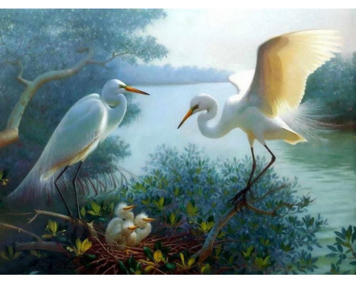 "RADUGA Картина по номерам ""Белые цапли"" 40х50 см (RDG-0359)"