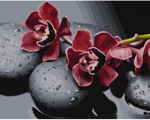 RDG-2279 Ветка орхидеи на камнях