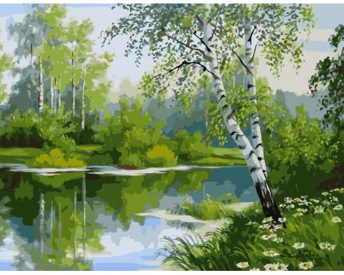 Берёзы у реки